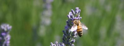 Nuovamente disponibile il miele biologico di Preggio