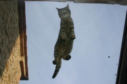 La gatta sul tetto che scotta
