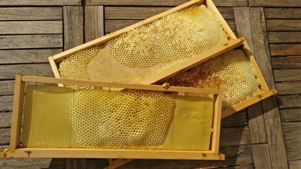 Noooo.... il miele di edera....